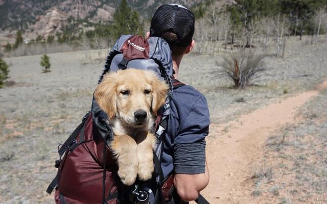 Campings que admiten perros en bungalows en Andalucía