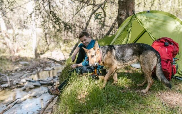 Campings en Asturias que admiten perros