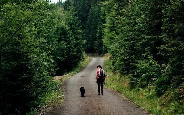 Qué tener en cuenta a la hora de viajar con mascotas