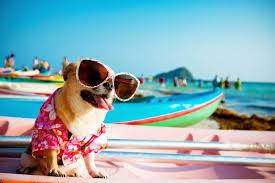Donde ir de vacaciones con perros